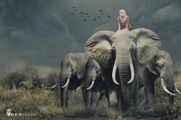 gajah1